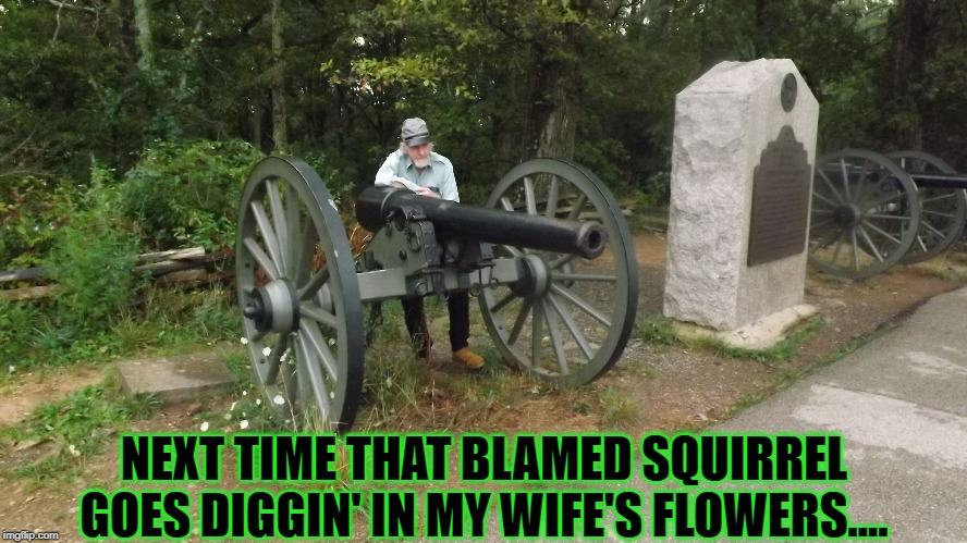 10 pounder squirrel gun. | NEXT TIME THAT BLAMED SQUIRREL GOES DIGGIN' IN MY WIFE'S FLOWERS.... | image tagged in fun varmit humor,pests,pest control | made w/ Imgflip meme maker