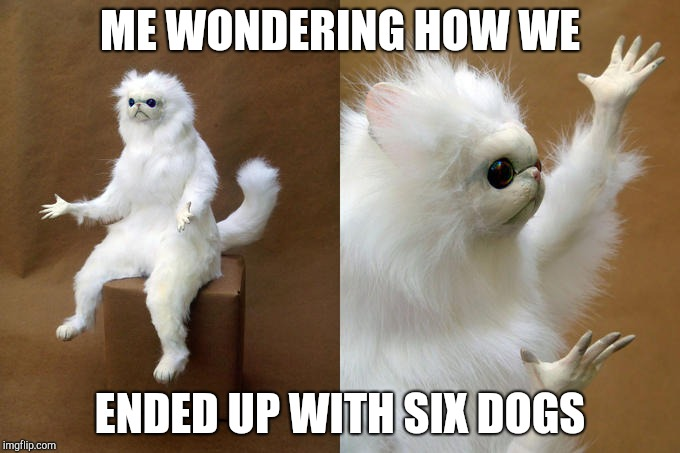 Persian Cat Room Guardian | ME WONDERING HOW WE ENDED UP WITH SIX DOGS | image tagged in memes,persian cat room guardian | made w/ Imgflip meme maker