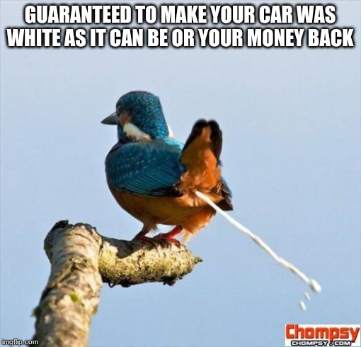 Bird pooping | GUARANTEED TO MAKE YOUR CAR WAS WHITE AS IT CAN BE OR YOUR MONEY BACK | image tagged in bird pooping | made w/ Imgflip meme maker