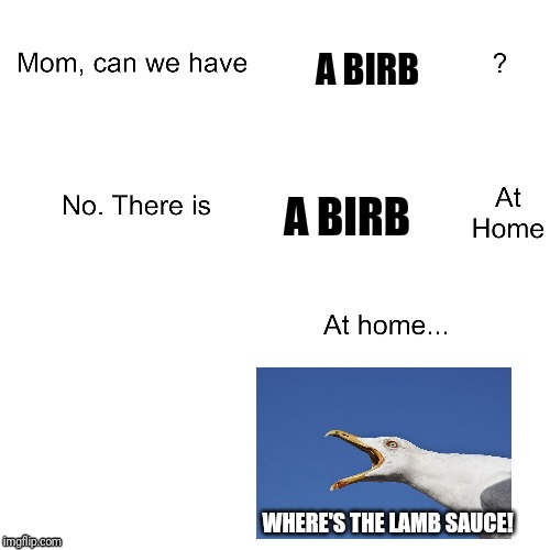 Ha! It's Gordon Ramsay the birb! | A BIRB A BIRB WHERE'S THE LAMB SAUCE! | image tagged in mom can we have,seagulls,where's the lamb sauce,birb | made w/ Imgflip meme maker