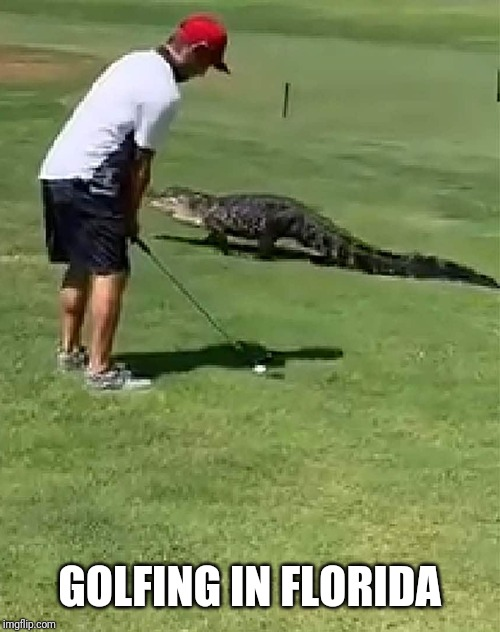 NOPE. | GOLFING IN FLORIDA | image tagged in funny,memes,golf,florida,gator,alligator | made w/ Imgflip meme maker
