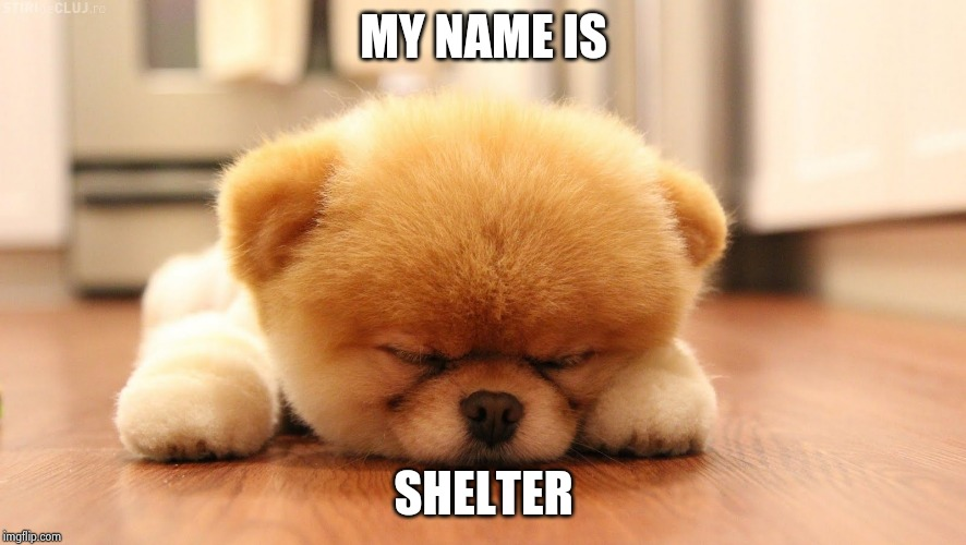 Sleeping dog | MY NAME IS SHELTER | image tagged in sleeping dog | made w/ Imgflip meme maker