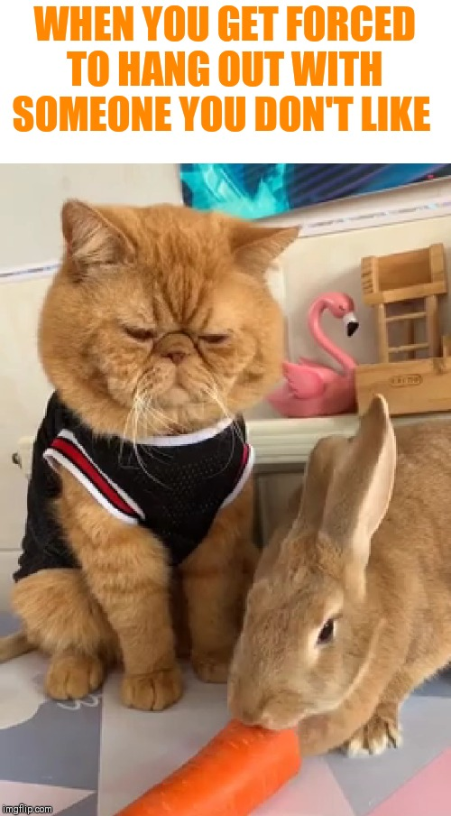 WHEN YOU GET FORCED TO HANG OUT WITH SOMEONE YOU DON'T LIKE | image tagged in unlikely friends,grumpy | made w/ Imgflip meme maker