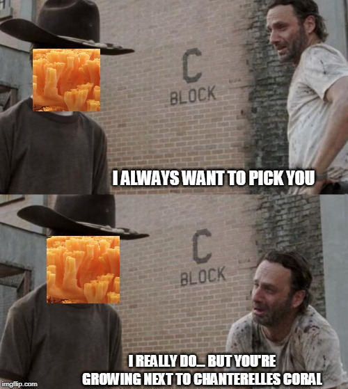 coral | I ALWAYS WANT TO PICK YOU I REALLY DO... BUT YOU'RE GROWING NEXT TO CHANTERELLES CORAL | image tagged in memes,rick and carl,ccoral mushrooms | made w/ Imgflip meme maker
