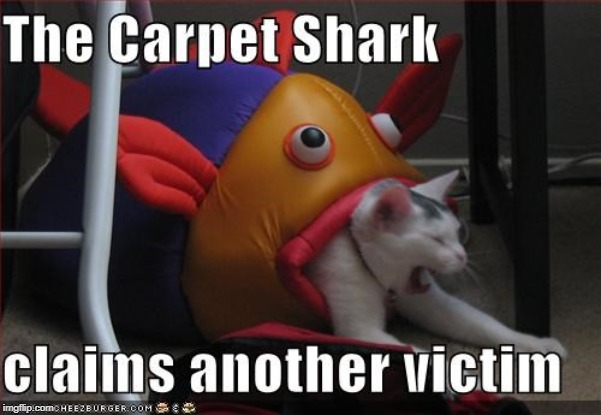 Image result for carpet shark cartoon