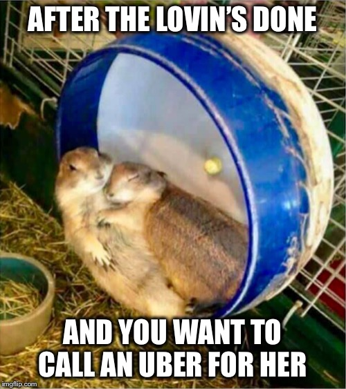 She has no idea... |  AFTER THE LOVIN'S DONE; AND YOU WANT TO CALL AN UBER FOR HER | image tagged in hamster,love,uber,cuddle | made w/ Imgflip meme maker