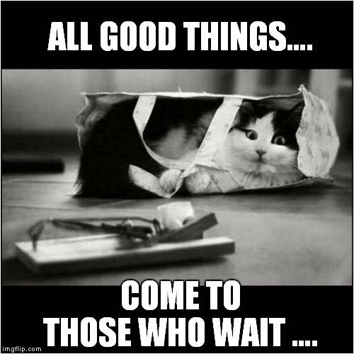 Cat Patience - Imgflip