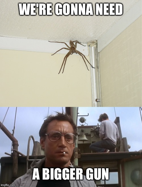 WE'RE GONNA NEED A BIGGER GUN | image tagged in going to need a bigger boat,huge spider | made w/ Imgflip meme maker
