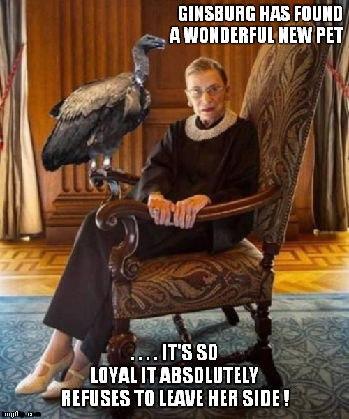 It's awesome when you find a new pet...or a new pet finds you! |  GINSBURG HAS FOUND A WONDERFUL NEW PET; . . . . IT'S SO LOYAL IT ABSOLUTELY REFUSES TO LEAVE HER SIDE ! | image tagged in ruth bader ginsburg,pets | made w/ Imgflip meme maker