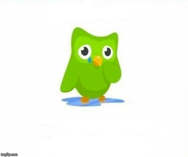 Duolingo Crying For No Reason | image tagged in duolingo bird | made w/ Imgflip meme maker