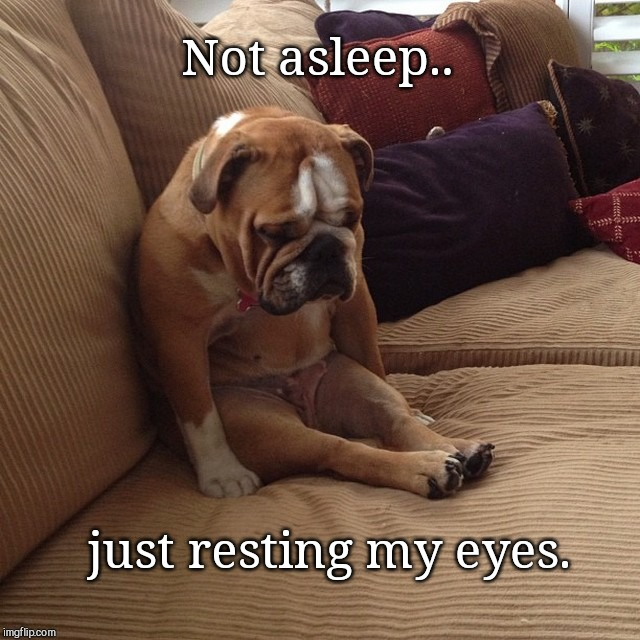 When your dad be like.. | Not asleep.. just resting my eyes. | image tagged in sleepy dog,dads,humor | made w/ Imgflip meme maker