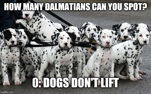 dalmatians |  HOW MANY DALMATIANS CAN YOU SPOT? 0: DOGS DON'T LIFT | image tagged in dalmatians | made w/ Imgflip meme maker