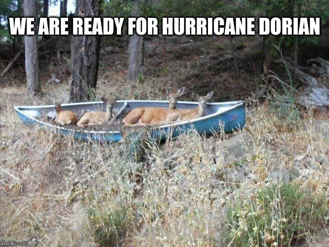 Bring on the storm | WE ARE READY FOR HURRICANE DORIAN | image tagged in deer in canoe,hurricane dorian,prepare yourself,bring it,i will ride it out | made w/ Imgflip meme maker
