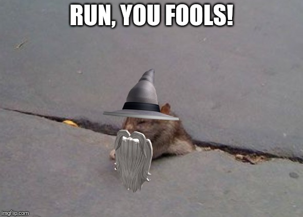 Run, you fools! Leave me to the cat! | RUN, YOU FOOLS! | image tagged in rat,gandalf,lord of the rings,frodo,the hobbit,wizard | made w/ Imgflip meme maker