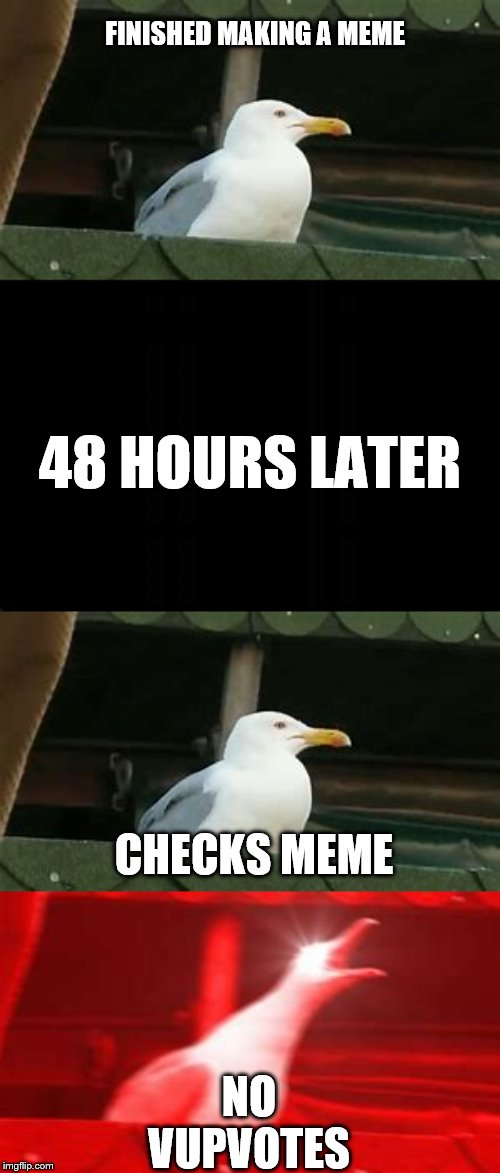 Mad Seagull | FINISHED MAKING A MEME NO VUPVOTES 48 HOURS LATER CHECKS MEME | image tagged in no upvotes,seagull,after hours | made w/ Imgflip meme maker