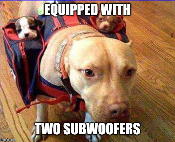 EQUIPPED WITH TWO SUBWOOFERS | image tagged in bad pun dog | made w/ Imgflip meme maker