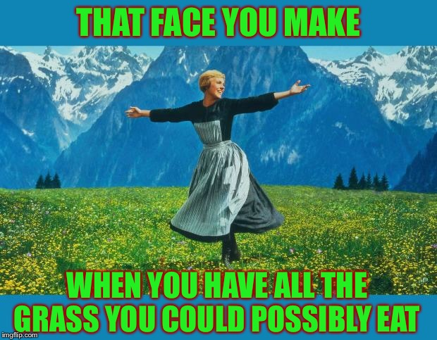 the sound of music happiness | THAT FACE YOU MAKE WHEN YOU HAVE ALL THE GRASS YOU COULD POSSIBLY EAT | image tagged in the sound of music happiness | made w/ Imgflip meme maker