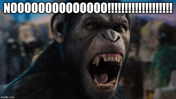 Caeser Rise of the Planet of the Apes | NOOOOOOOOOOOOOO!!!!!!!!!!!!!!!!!!! | image tagged in caeser rise of the planet of the apes | made w/ Imgflip meme maker