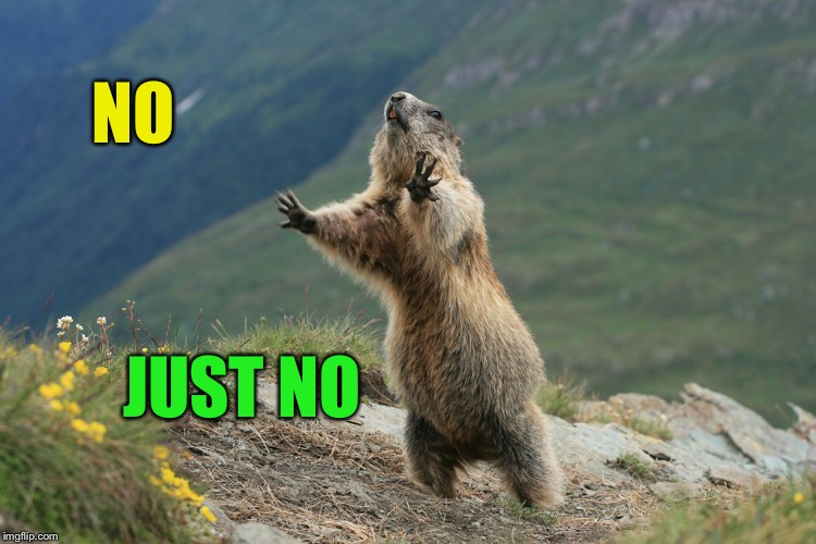 WOODCHUCK | NO JUST NO | image tagged in woodchuck | made w/ Imgflip meme maker
