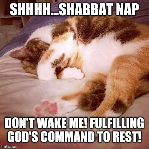 Syrah fulfills this mitzvah with excellence | SHHHH...SHABBAT NAP DON'T WAKE ME! FULFILLING GOD'S COMMAND TO REST! | image tagged in cats,judaism,shabbat | made w/ Imgflip meme maker