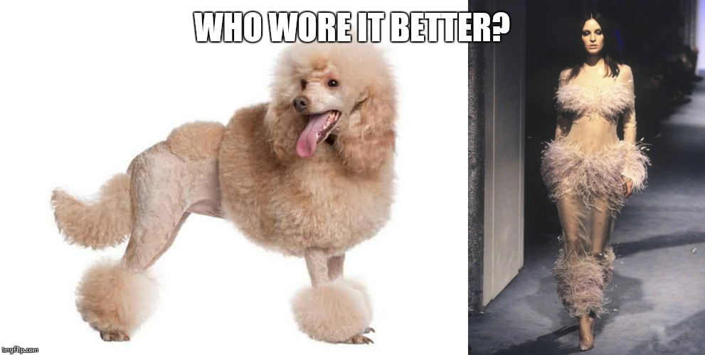 POODLE LADY | WHO WORE IT BETTER? | image tagged in poodle,dogs,who wore it better,model | made w/ Imgflip meme maker