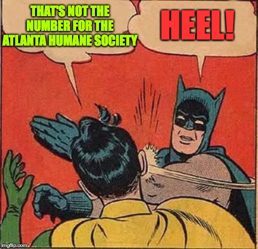 Batman Slapping Robin Meme | THAT'S NOT THE NUMBER FOR THE ATLANTA HUMANE SOCIETY HEEL! | image tagged in memes,batman slapping robin | made w/ Imgflip meme maker
