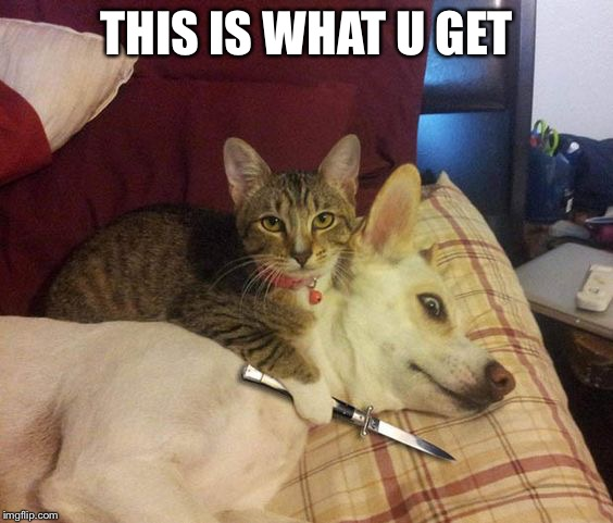 Cat knife Dog | THIS IS WHAT U GET | image tagged in cat knife dog | made w/ Imgflip meme maker