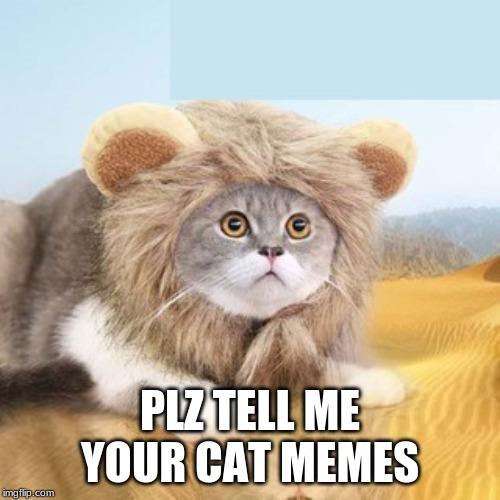 Cat meme suggestions? Plz help |  PLZ TELL ME YOUR CAT MEMES | image tagged in lion kitty,cat,memes,help needed,cat memes,funny | made w/ Imgflip meme maker