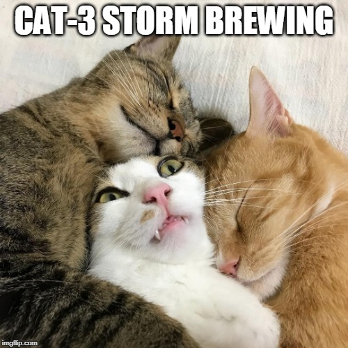 Cat Hurricane | CAT-3 STORM BREWING | image tagged in cat surrounded by cats,cat,hurricane,florida,dorian | made w/ Imgflip meme maker