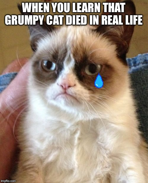 Grumpy Cat | WHEN YOU LEARN THAT GRUMPY CAT DIED IN REAL LIFE | image tagged in memes,grumpy cat | made w/ Imgflip meme maker