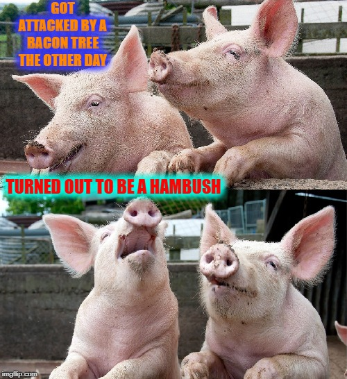 What Did One Pig Say to the Other? | GOT ATTACKED BY A BACON TREE      THE OTHER DAY TURNED OUT TO BE A HAMBUSH | image tagged in vince vance,pigs,talking,telling jokes,bacon,ambush | made w/ Imgflip meme maker