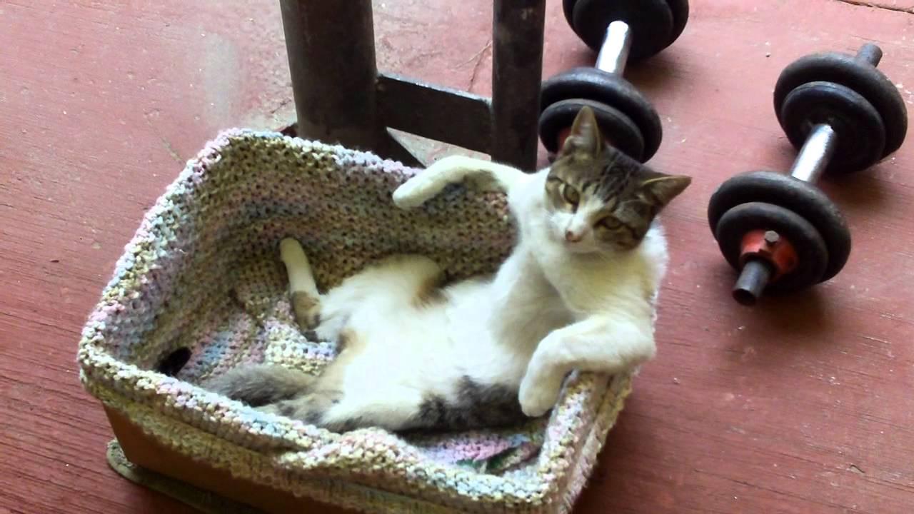 гифки кошки смешные на ютубе украшать какой