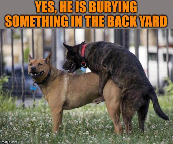Burying a bone in the backyard. - Imgflip