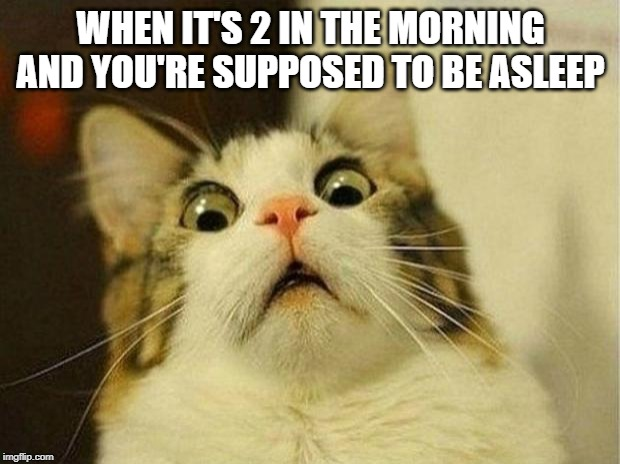 Scared Cat Meme | WHEN IT'S 2 IN THE MORNING AND YOU'RE SUPPOSED TO BE ASLEEP | image tagged in memes,scared cat | made w/ Imgflip meme maker
