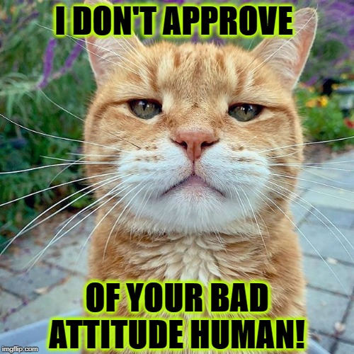 I DON'T APPROVE OF YOUR BAD ATTITUDE HUMAN! | image tagged in i don't approve | made w/ Imgflip meme maker