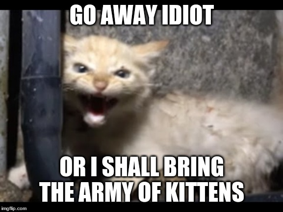 Leader of an army, of kittens??? |  GO AWAY IDIOT; OR I SHALL BRING THE ARMY OF KITTENS | image tagged in kitten army,go away,leader | made w/ Imgflip meme maker