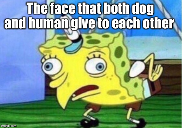 The face that both dog and human give to each other | image tagged in memes,mocking spongebob | made w/ Imgflip meme maker
