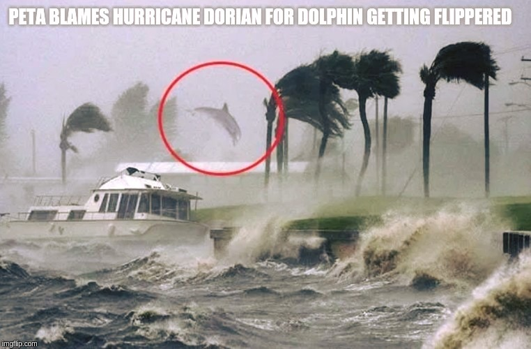 PETA blames Hurricane Dorian for dolphin getting Flippered! | image tagged in hurricane dorian,save the dolphins,peta,hurricane,weird stuff,dolphins | made w/ Imgflip meme maker