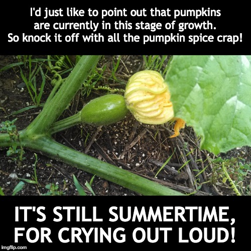 Enough Already! | I'd just like to point out that pumpkins are currently in this stage of growth. So knock it off with all the pumpkin spice crap! IT'S STILL  | image tagged in pumpkin spice | made w/ Imgflip meme maker