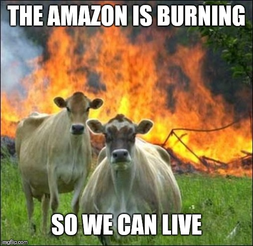 Evil Cows |  THE AMAZON IS BURNING; SO WE CAN LIVE | image tagged in memes,evil cows | made w/ Imgflip meme maker