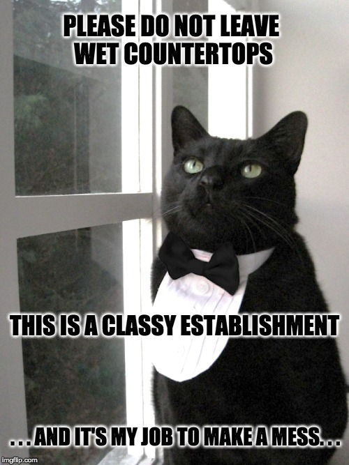 Classy Establishment mess | PLEASE DO NOT LEAVE  WET COUNTERTOPS THIS IS A CLASSY ESTABLISHMENT . . . AND IT'S MY JOB TO MAKE A MESS. . . | image tagged in cats,stay classy,classy,messy | made w/ Imgflip meme maker