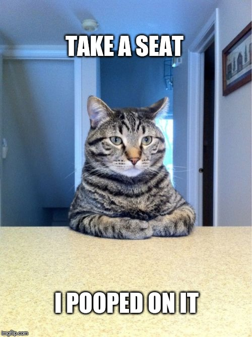Take A Seat Cat Meme | TAKE A SEAT I POOPED ON IT | image tagged in memes,take a seat cat | made w/ Imgflip meme maker