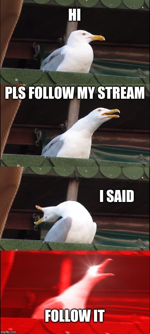 Pls follow my stream | HI PLS FOLLOW MY STREAM I SAID FOLLOW IT | image tagged in memes,inhaling seagull,folllow my stream | made w/ Imgflip meme maker