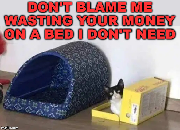 Like kids, they rather play with the box. | DON'T BLAME ME WASTING YOUR MONEY ON A BED I DON'T NEED | image tagged in cats | made w/ Imgflip meme maker