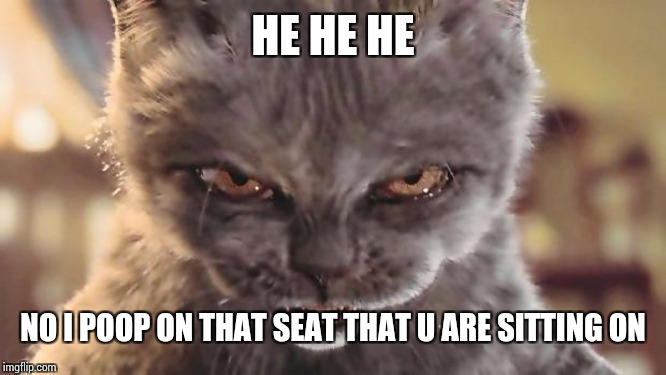 Evil Cat | HE HE HE NO I POOP ON THAT SEAT THAT U ARE SITTING ON | image tagged in evil cat | made w/ Imgflip meme maker