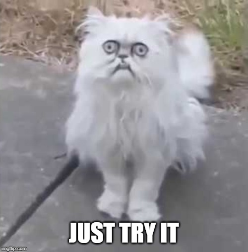 Weird cat | JUST TRY IT | image tagged in weird cat | made w/ Imgflip meme maker