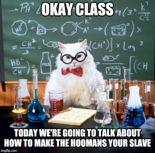 Chemistry Cat Meme | OKAY CLASS TODAY WE'RE GOING TO TALK ABOUT HOW TO MAKE THE HOOMANS YOUR SLAVE | image tagged in memes,chemistry cat | made w/ Imgflip meme maker