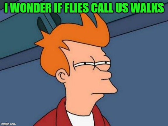 deep thought | I WONDER IF FLIES CALL US WALKS | image tagged in memes,futurama fry,flys,silly | made w/ Imgflip meme maker
