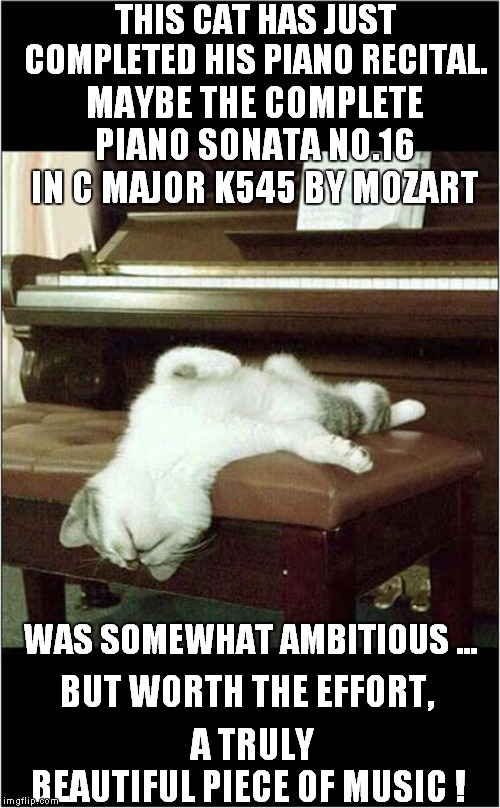 Exhausted Cat After Piano Recital | THIS CAT HAS JUST COMPLETED HIS PIANO RECITAL. A TRULY BEAUTIFUL PIECE OF MUSIC ! MAYBE THE COMPLETE PIANO SONATA NO.16 IN C MAJOR K545 BY M | image tagged in fun,cats,piano | made w/ Imgflip meme maker
