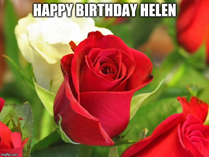 Roses | HAPPY BIRTHDAY HELEN | image tagged in roses | made w/ Imgflip meme maker